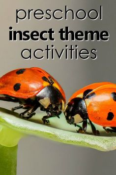 Bugs are everywhere, and that makes them a favorite preschool theme topic! Here are some fabulous resourcesfor planning your preschool insect theme. Most of these insect theme preschool activities activities are designed for kids ages 3 through 5, but many can be modified for younger and older kids as well. #preschool #prek #kidsactivities