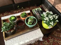 Tiny Apartment Living, Live Plants, Greenery, Create Yourself, Planter Pots, Indoor, Home Decor, Interior, Decoration Home
