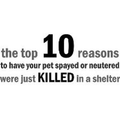 Everyday ...spay or neuter your pets