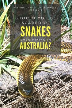 SNAKES of Western Australia: How to keep yourself and your family safe while hiking and camping in Western Australia - what snakes will you see - how to treat a snake bite - how to avoid getting bitten Western Australia, Australia Travel, Travel With Kids, Family Travel, Family Camping, Travel Blog, Adventure Activities, Best Hikes, Amazing Destinations
