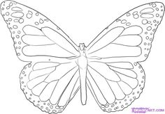 Steps To Draw A Butterfly   How to Draw a Butterfly, Step by Step, Butterflies, Animals, FREE ...
