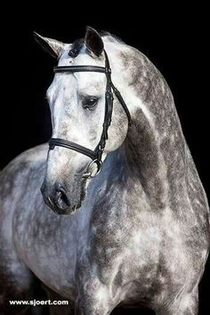 Beautiful Grey!!! I want my next horse to be a grey