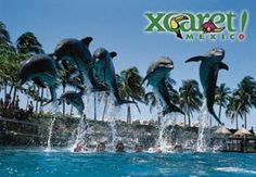 Swim with the Dolphins - Riviera Maya