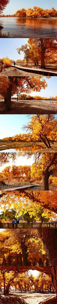 beautiful autumn scenes