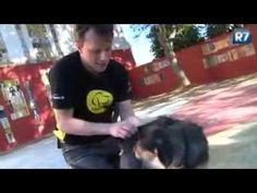 Massagem canina - YouTube