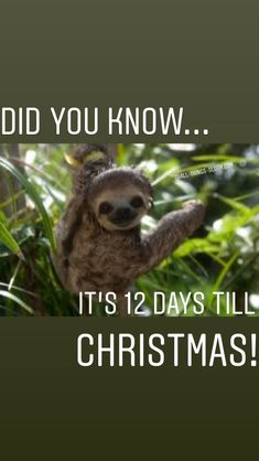 It's almost time for Christmas, time to get the best sloth presents! Days Till Christmas, Christmas Countdown, Sloths, Funny Pictures, Presents, Fanny Pics, Gifts, Favors, Funny Pics