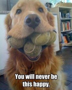 Is this the happiest dog in the world?! We think it might be!
