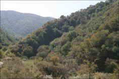 Apple forests in Tien Shan mountain range in souther Kazakhstan