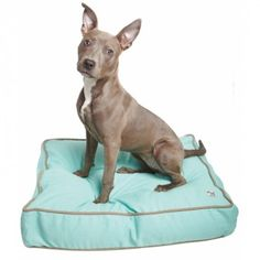 Nightswimming dog bed cover by Molly Mutt. DIY dog bed stuffed with blankets and old clothes.
