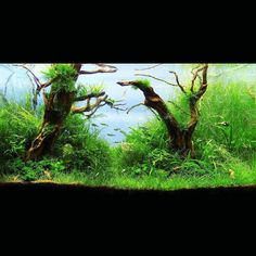How can you create beautiful tanks like this? Sign up with the link in our page!  Jordi Pelegri