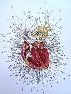 ☤ MD ☞☆☆☆ Measured Heart in Inches by Enrique Castrejon. 2011.  #anatomy