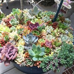 Wow!!! An amazing full planter. Regram from @limpopo_v_v_ #succulent #succulents #succulentlove #succulove #succulenthoarder #succulentfreak #succulentobsession #succulentporn #regram