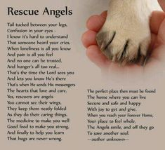 Angels Animal - Yahoo Image Search Results