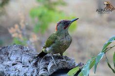 Con las lluvias de estos días, se adelanta el otoño y nuevas especies muestran su esplendor aquí en Sierra Morena,