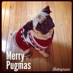 merry pugmas :)