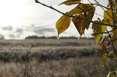 Finnish nature. October 2013. #Finland #autumn