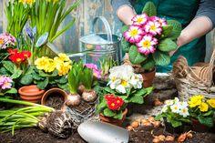 Jak si doma udělat samozavlažovací květník?