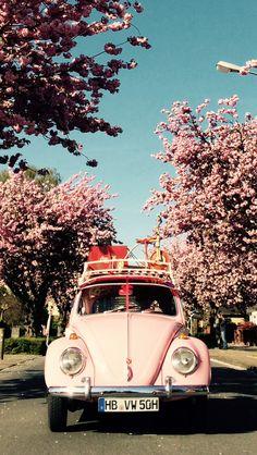 Rosa May beetle classic wallpaper My Dream Car, Dream Cars, Auto Logo, Van Vw, Classic Wallpaper, Vw Vintage, Vw Cars, Cute Cars, Retro Cars