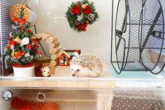 ハリのケージをクリスマスにしました 去年の飾りを置いただけなのでちょっと変えたいです #hedgie #hedgehog #ハリネズミ #はりねずみ #hérisson #pet #玻璃 #christmas by ron_hari
