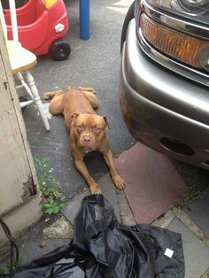 reunited geport area lost, found or adoptable pets Yesterday ·    LOST 4th of July light brown pitbull around Boston ave and success please call 2033350839 if you have any info thanks please share