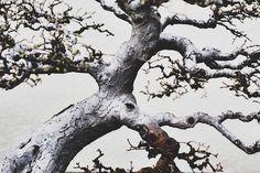 Beautiful and Diverse Bonsai Trees Around the World17
