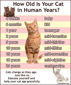 How old is your cat in human years ?