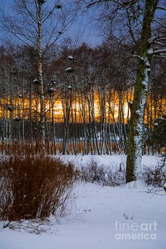 ✯ Winter sunset