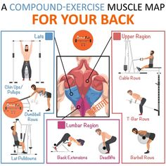 Most of the common compound back exercises will somewhat. Lat Workout, Back Workout Routine, Back Workout Men, Back And Bicep Workout, Gym Workout Chart, Gym Workout Tips, Biceps Workout, Workout Videos, Compound Back Exercises