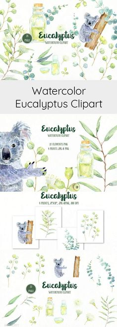 Watercolor Clipart Eucalyptus Hand painted eucalyptus leaves, flowers, oil bottles, koala and decorative leaves for instant download. They are great for wedding invitations, art prints, blog background, web elements, menu,logo design, food and restaurant flyers and scrapbook.(aftlink)