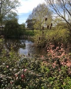 Pond in the spring s