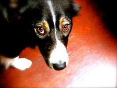 De starende ogen : Rust 9 maanden.