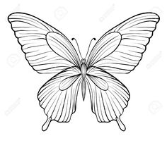 ButterflyPrintablesJpg   Butterfly Printables