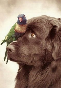 Henry and Pipi by Rachael Hale. This photo reminds me of my Doberman bud and his best freind chip a sun conure.