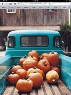 Pick-up pumpkins.