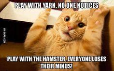 Kitty plays with yarn
