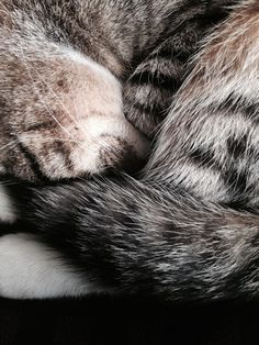 Cats = pure softness!