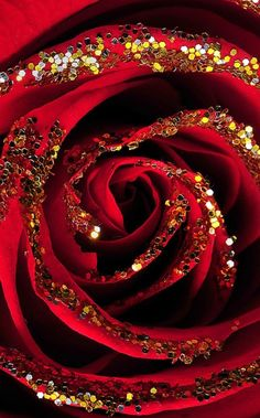 Red Rose with gold glitter Black And Gold Aesthetic, Red Aesthetic, Glitter Roses, Red Glitter, Rose Wallpaper, Love Flowers, Special Flowers, Shades Of Red, Ruby Red