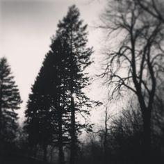 MN trees tattoo?