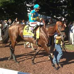American Pharoah in the paddock at Monmouth Park before his victory in the Haskell.