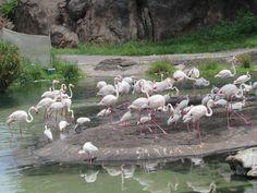 Otros animales no tienen su alimentación adecuada y no reciben su color de pigmentación, esto es culpa de los cuidadores.