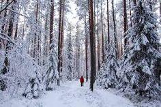Afbeeldingsresultaat voor finnish woods
