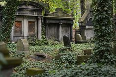 If you have a back yard, you have a responsibility.   Don't Let Ivy Turn Seattle Into a Ecological Cemetery: http://realestategals.com/ivy/