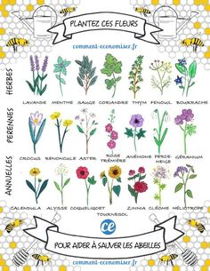 Bee-friendly herbs, perennials and annuals. SAVE THE BEES! No bees, no food. Stop using chemicals! Bee Friendly Plants, Bee Friendly Flowers, Hollyhock, Save The Bees, Plantation, Dream Garden, Witch's Garden, Spring Garden, Garden Guide