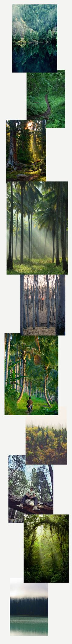 Travel Daydreaming: Lost in the Forest by The Wanderlove Collective Zine, Travel Inspiration, City Photo, Landscapes, Collage, Lost, Digital, Creative, Paisajes