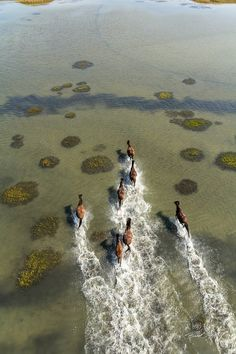 Wild horses of Shackleford Banks in North Carolina. Image by Brad Styron.
