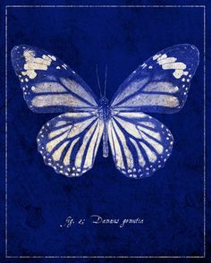 Common Tiger Butterfly Cyanotype