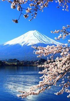 Fuji Y Sakura O Cherry Blossoms Lake Kawaguchi, Japón Fotos, Retratos, Imágenes Y Fotografía De Archivo Libres De Derecho. Image 6997824.