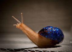 Snail #mollusk #mollusc