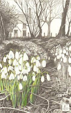 Snowdrops Greetings Card blank note card by angelajsimpson, £2.50