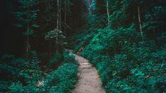 Tree Hd Wallpaper, Forest Wallpaper, Beach Wallpaper, Travel Wallpaper, Music Wallpaper, Love Wallpaper, Nature Wallpaper, Forest Path, Tree Forest